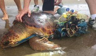 FOTOS: rescatan tortuga que estaba envuelta en plásticos y basura
