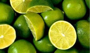 Limones peruanos en riesgo por plaga que afecta a cítricos de países latinoamericanos