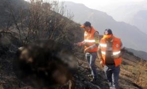 Cusco: incendio forestal mata a más de 200 ovejas en comunidad de Patabamba