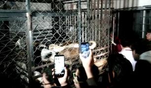 México: detienen a mujer que habría matado animales para vender hamburguesas