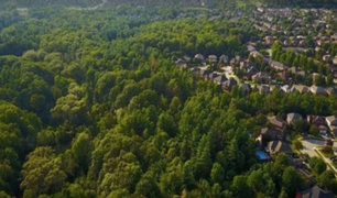 Cambio climático: ONU propone plantar bosques urbanos en África y Asia