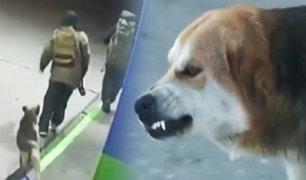 Chile: héroe de cuatro patas frustra robo en gasolinería