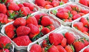 ¡CUIDADO! Parásitos de las fresas no se eliminan ni con lejía