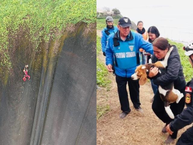 Mira el emotivo rescate de perro que quedó atrapado en malla de la Costa Verde