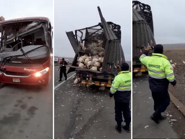 Cañete: al menos 4 heridos tras aparatoso choque entre bus y camión repleto de pavos