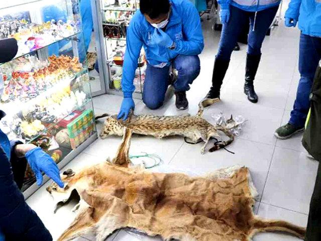 Colombia: hallan más de mil animales sacrificados por brujería