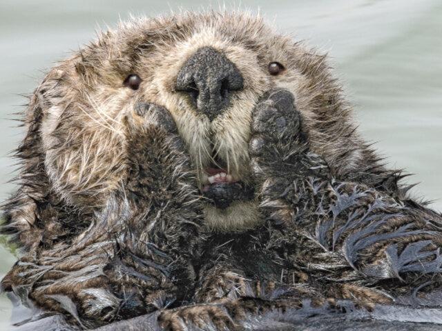 Comedy Wildlife Photography Awards 2019: las fotos más graciosas de animales salvajes
