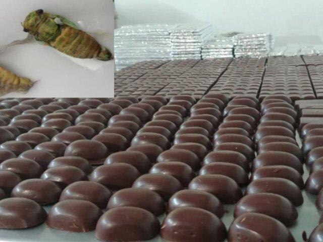 Junín: crean chocolate a base de suri y chicharra para combatir la anemia
