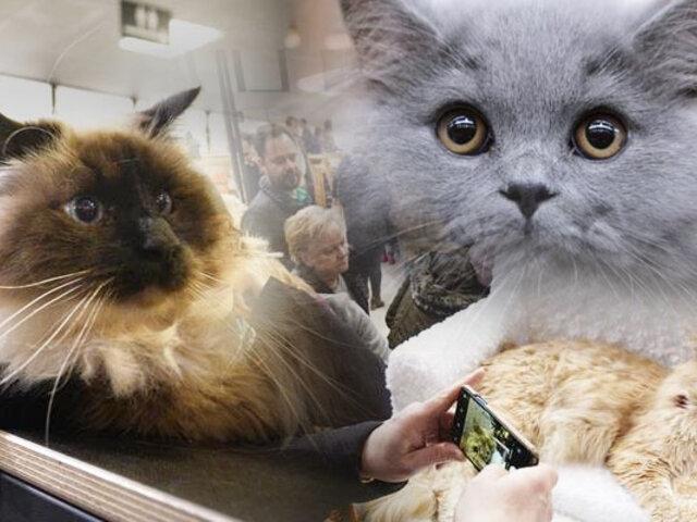 Polonia: se realizó la primera Exposición Internacional del Gato