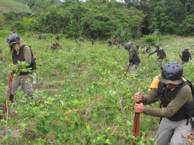 Devida: Erradicación de hoja de coca ilegal en el Vraem es por pedido de nativos