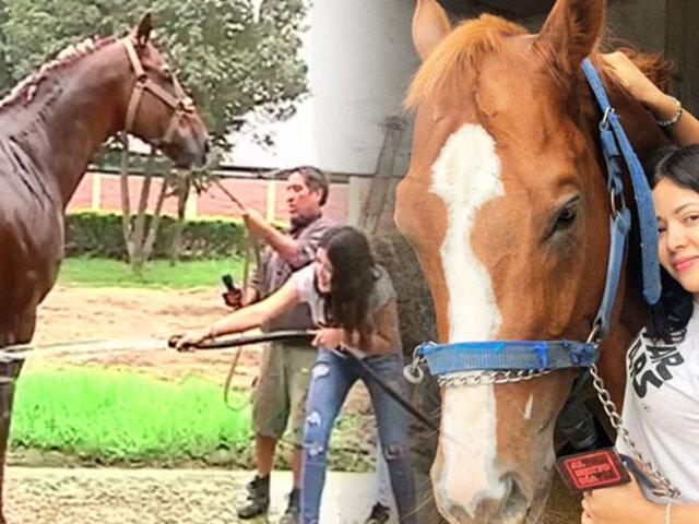 Reportera de ASD se convierte en cuidadora de caballos de pura sangre