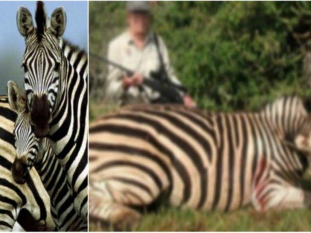 Cazadores matan cebras en peligro de extinción y publican fotos en redes