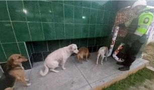 Áncash: instalan contenedores de comida para perros callejeros en comisaría