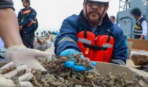 Incautan cargamento ilegal  de caballitos de mar valorizado en 6 millones de dólares