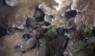 Fallecen seis elefantes tras caer de cascada cuando intentaban rescatar una cría