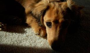 Artista español fue hallado muerto tras ser devorado por sus perros