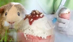Ecuador: el helado de cuy es la nueva sensación por su peculiar sabor