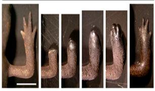 ¿Qué tienen en común humanos y salamandras?