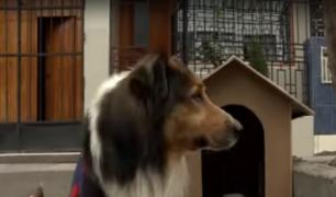 Comas: perro ahuyenta a ladrón y frustra robo a joven