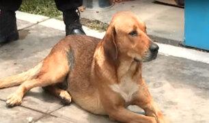La Perla: vecinos enfrentados por perro sin hogar