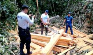 Moyobamba: Fiscalía constató tala ilegal de madera en zona de conservación