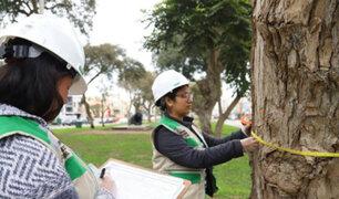 Magdalena realiza censo de árboles para promover su preservación