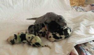 EEUU: nace cachorro de color verde y las redes enternecen