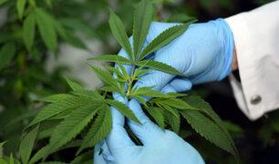 Francia: aprueban uso de cannabis medicinal en pacientes graves