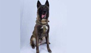 Conoce al perro que ayudó a capturar al terrorista del Estado Islámico más buscado