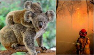 Cientos de koalas podrían haber muerto en incendio forestal en Australia