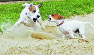 Surco: perro sin dispositivos de seguridad atacó a otra mascota