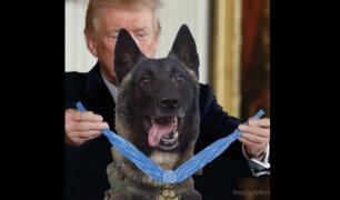 Trump recibirá en la Casa Blanca a perro que acabó con Al Bagdadi