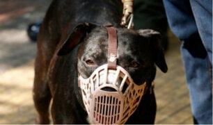 Chimbote: perro le arranca cuero cabelludo a menor durante ataque