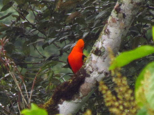 Establecen nueva área de conservación regional en Cajamarca