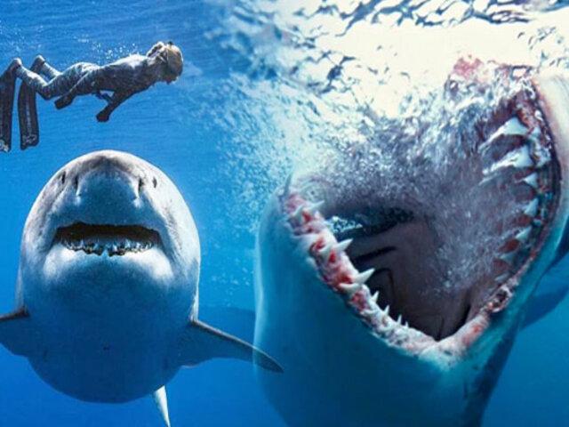 Australia: pescador se salva del ataque mortal de un tiburón blanco