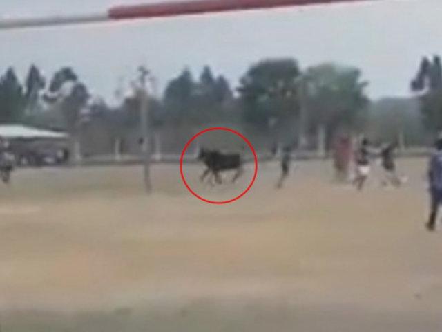VIDEO: toro salvaje ingresa a cancha de fútbol y embiste a espectadores