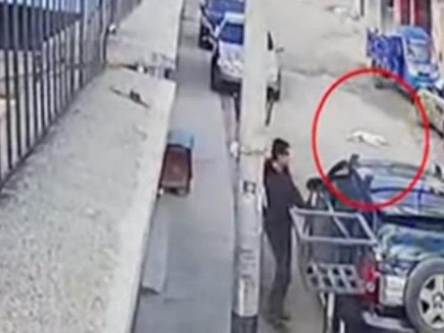 Huancayo: conductor atropella a perro y huye del lugar