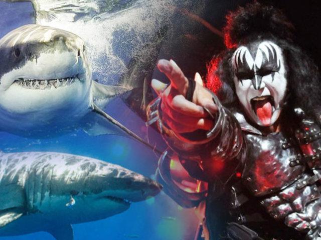 Kiss tocará para los tiburones blancos en Australia