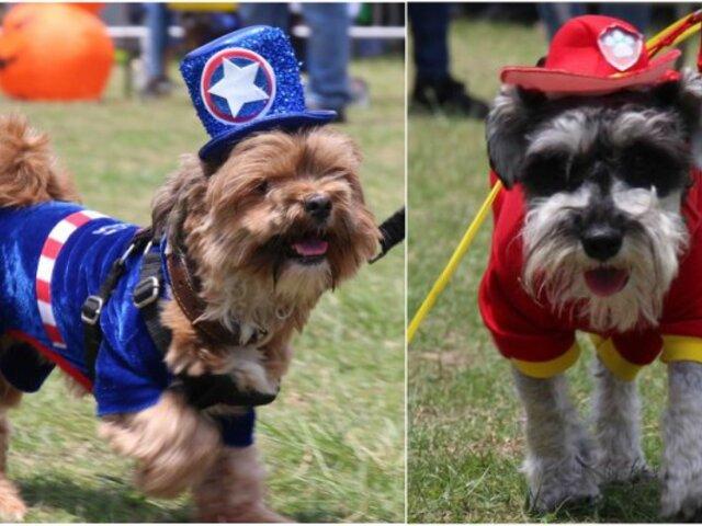Halloween: más de cien mascotas lucieron tiernos disfraces en desfile