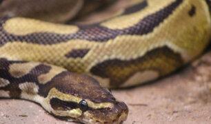 Hallan muerta a mujer con una serpiente enroscada en el cuello y otras 140 alrededor