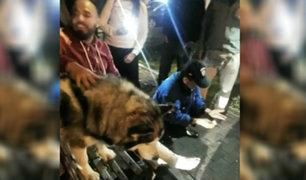 Perro habría frustrado asalto a turista colombiano en Miraflores