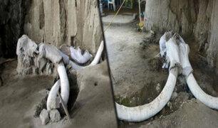 México: hallan trampas artificiales con huesos de mamuts