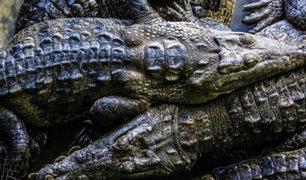 EEUU: cazador queda grave tras ser atacado por caimán de tres metros de largo