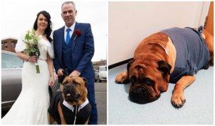 Adelantaron su boda para que su perrito con cáncer pueda asistir