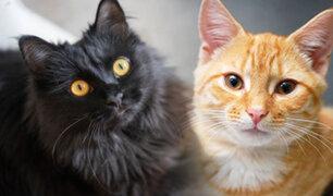 ¿Sabes cuántos años vive un gato?