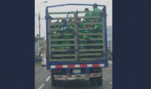 'Como ganado', así son transportados trabajadores de limpieza de la Municipalidad de Chorrillos