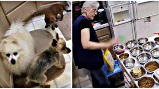 Mujer convierte su casa en refugio para perros ancianos que nadie quiere