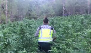 Policía española halló 16 mil plantas de marihuana en zona boscosa de Aragón