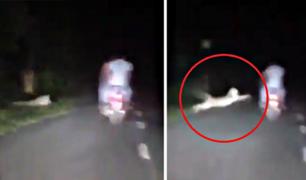 Un leopardo atacó sorpresivamente a una motocicleta en carretera
