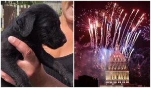 Perrito muere de ataque al corazón por ruido de fuegos artificiales